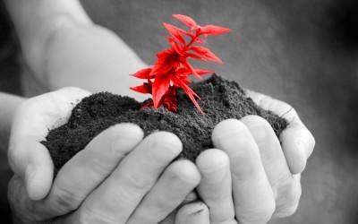 Plantje_handen_web_klein